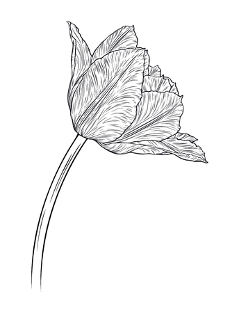 Hand drawn decorative doodle tulips hand drawn in lines. Vector illustration Illustration