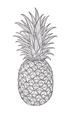 Hand drawn decorative pineapple. Stylized colorful fruit. Summer spring background, nature collection. Vector illustration Illustration