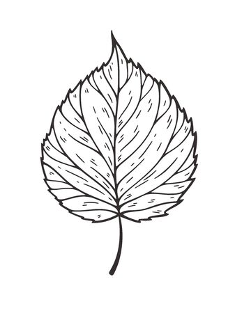 Falling leaves illustration. Decorative graphic black outline autumn leaves collection isolated on white background. Hand drawn organic lines 向量圖像