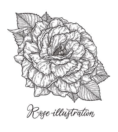 Rose flower hand drawn in lines. Black and white monochrome graphic doodle elements.