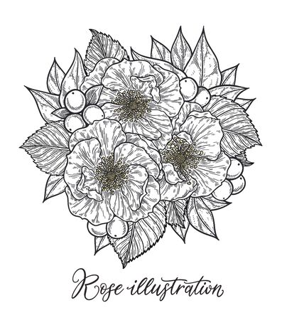 Roses and berries flower bouquet hand drawn in lines. Black and white monochrome graphic doodle elements. Isolated vector illustration, template for design