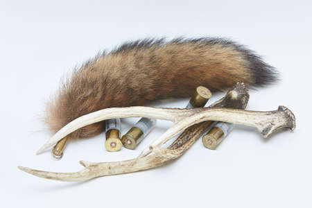 Pair of deer antlers, fox tail and bullets isolated on a white background Stock Photo