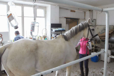 Veterinarian during medical exam (listening to heartbeat and lung) of the horse. Veterinarian doctor with horse - intravenous injections
