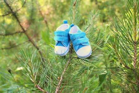 close-up of blue baby shoes on the pine branch in the forest