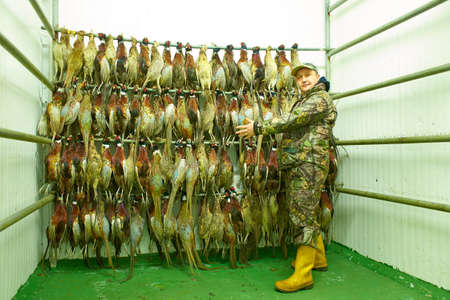 Hunting trophies hang on bunches. A man with a lot of shots pheasants.