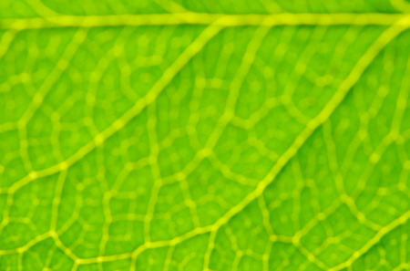Blur Green Abstract Background. Green Leaf macro. Stock Photo