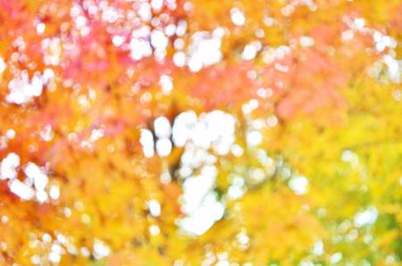 autumn colour: Autumnal natural bokeh for background or backdrop. Stock Photo