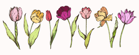 Set hand drawing of spring flowers-tulips. Vector illustration Stock Photo