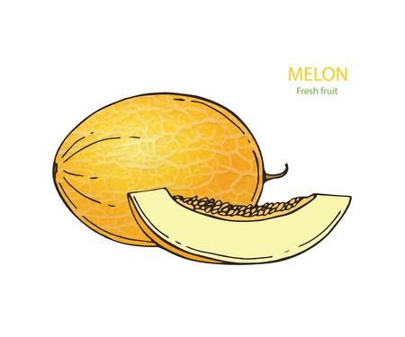 Rijpe en sappige gele meloen, vectordieillustratie op witte achtergrond wordt geïsoleerd. Tekening van verse meloen, meloen, meloen - heel en een schijfje