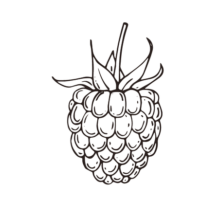 Hand drawn raspberries icon. Vector illustration