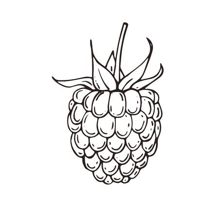 Hand drawn raspberries icon. Vector illustration