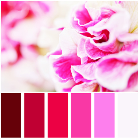Macro photo of petunia flower and palette of colors. Colour swatches. Stock Photo