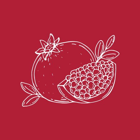 Pomegranate. Half of pomegranate. Pomegranate seeds. Vector Illustration. Hand drawn.