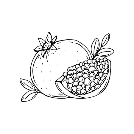 Pomegranate. Half of pomegranate. Pomegranate seeds. Vector Illustration. Hand drawn. Çizim