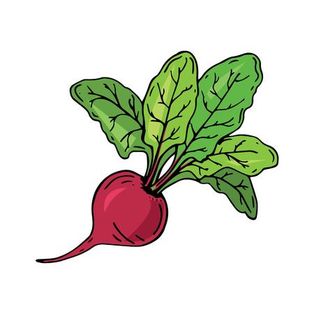 葉っぱの新鮮なビート。ベクターの図。ジューシーなビートルート。野菜。オーガニック食品。手描き ベクターイラストレーション