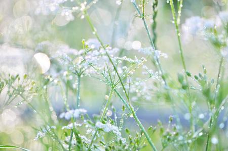 Grass texture. Fresh green grass with dew drops background, closeup. Sun. Soft Focus. Abstract Nature Background.