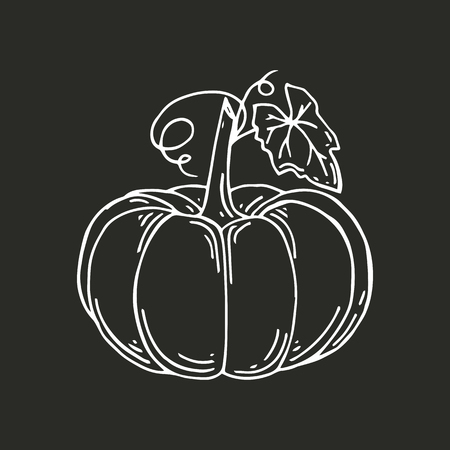 Pumpkin with leaves. Organic food. Hand drawn doodle large pumpkin with leaves. Vector illustration Illustration