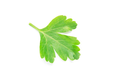 Green parsley leaf on white background - Image Stok Fotoğraf