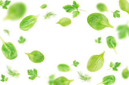 Flying  spinach, parsley and dill leaves over white background - Image. Stock Photo