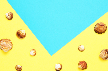 Sea shells pattern on  turquoise and yellow paper background. Summer concept. Flat lay, top view - Image Stockfoto