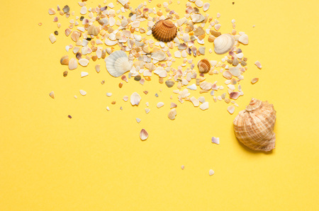 Sea shells pattern on yellow paper background. Summer concept. Flat lay, top view - Image Standard-Bild