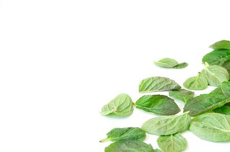 Türkische Minzeblätter auf weißem Hintergrund. - Bild Standard-Bild