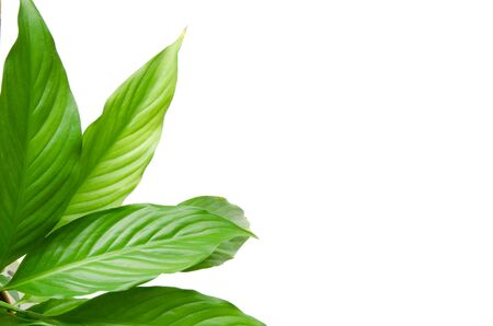 House plants isolated on white background. Top view. Copy space. - Image Stock Photo