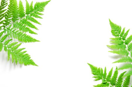 Top view of green tropical fern leaves on white background. Flat lay. Minimal summer concept. �¡opy space. - Image Stockfoto