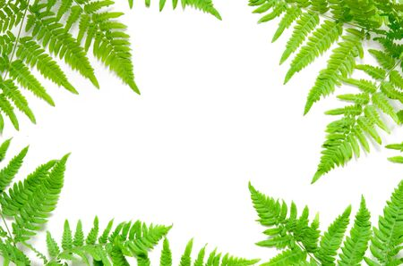 Top view of green tropical fern leaves on white background. Flat lay. Minimal summer concept. Ð¡opy space. - Image