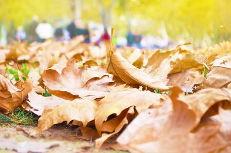 Dry autumn leaves on the ground. - image