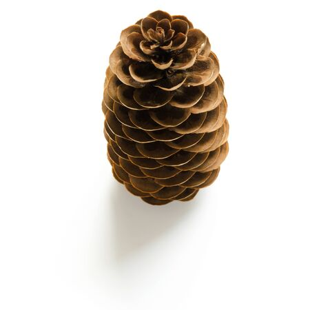 Pine cone on white background. - Image Stock Photo