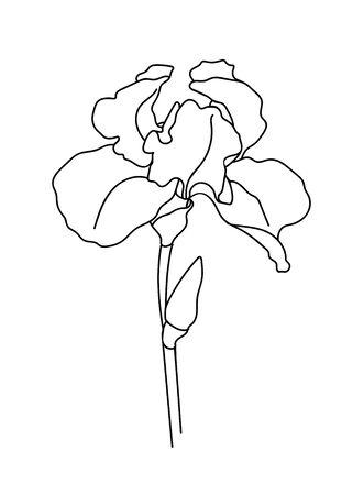 Drawn outline iris flower isolated on a white background. Abstract minimal plants. - vector illustration. Illustration