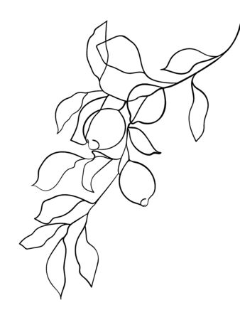 Abstract lemon fruit on branch. line drawing. - Vector illustration