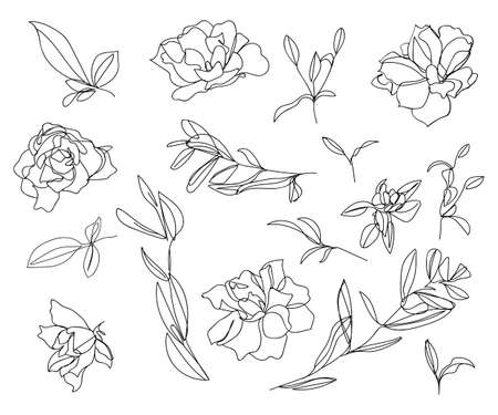 Set of sketches and line doodles. Isolated flowers, leaves - for decoration prints, labels, patterns. - Vector illustration. Coloring book