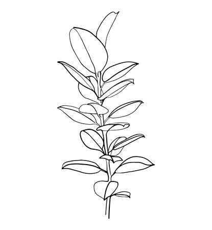 Ficus branch isolated on white. Line art drawing in black and white. - Vector illustration