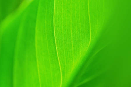 Abstract green leaf texture for background. -Image