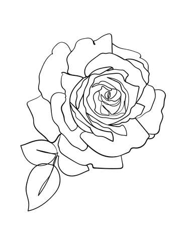 Rose flower icon. Line drawing. - Vector illustration