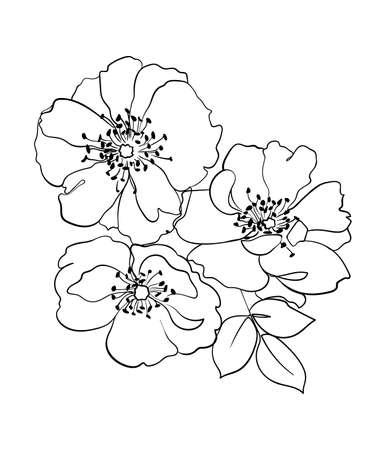 Rosehip flowers line drawing. - Vector illustration Illustration