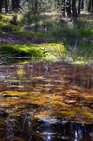 wetlands: Forest wetlands