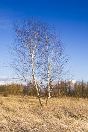Landscape with trees on the background of serene blue sky photo