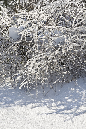 winter day: Illuminated and icy branches of trees on a sunny winter day
