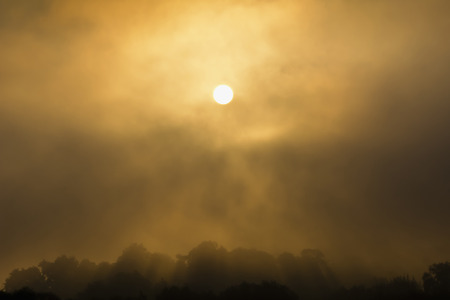 foggy hill: Foggy sunrise over the forest on the hill Stock Photo