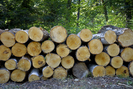 felling: Stack of felled trees in the forest. Felling old trees in the forest ready for transport. Stock Photo