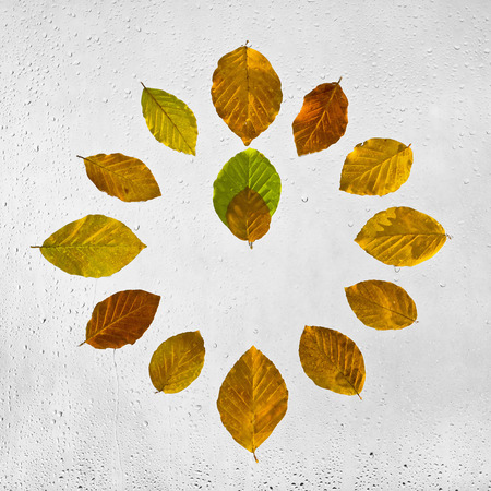 midday: Clock stacked with colorful autumn beech leaves on the wet glass.Twelve oclock. Noon. Midday. Colored highlighted the wet autumn leaves with raindrops glued to the window on a gray background.