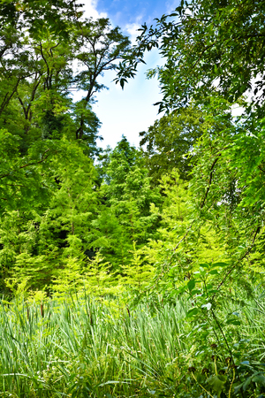 Dense Thickets luminous rays of the sun. A variety of green plants on a clear summer day.
