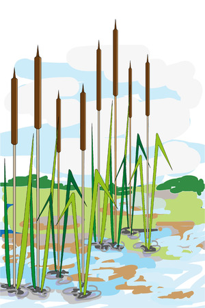bulrush: Pond and reeds in summer day. Perfect illustration for greeting cards, postcards, cover books.