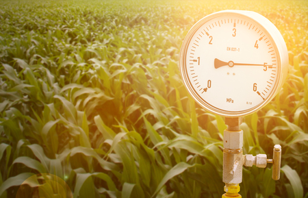 Pressure gauge in oil and gas production process for monitor condition, The gauge for measure in industry job. Corn field on the background