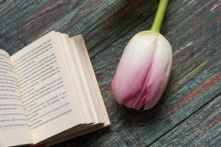 Pink tulips with books on wooden background with copy space 写真素材