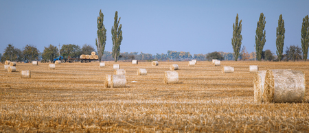 Hay bail harvesting in wonderful autumn farmers field landscape with hay stacks after cropping and golden ripening wheat field Stock Photo