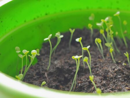 Green seedling appearing from soil in springtime. New life concept. Selective focus on the middle sprouts.